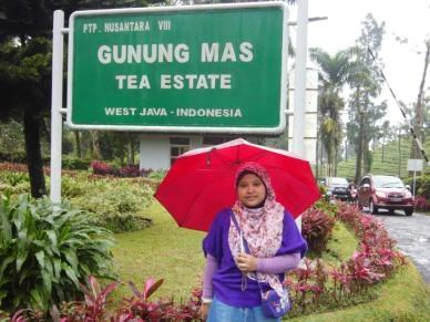 GUNUNG MAS - PUNCAK (2013)
