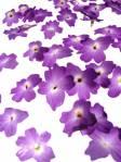 6888_tn_Flower Purple Rain